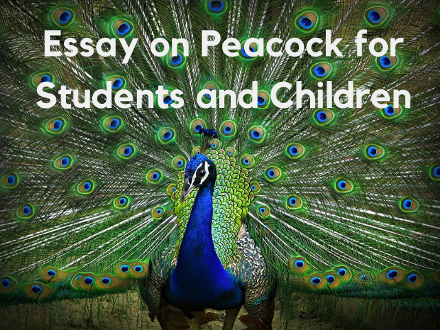Essay on Peacock